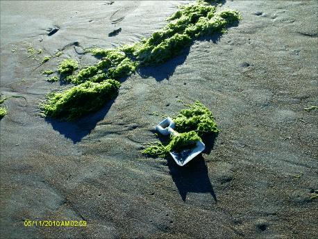 Sea-Weed-Toy-Retrospective
